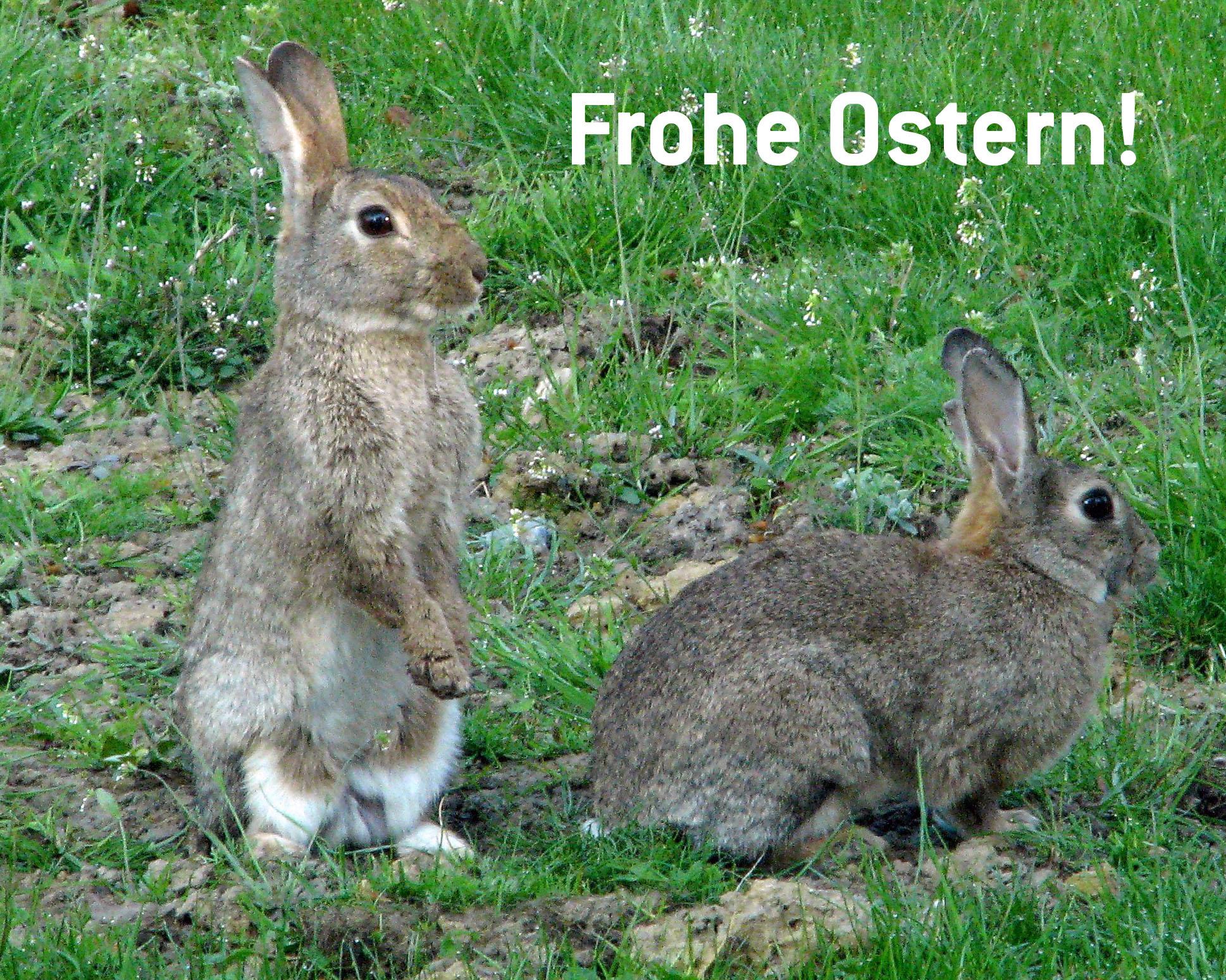 Frohe Ostern (zwei Hasen auf einer Wiese)