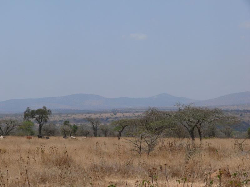 Dürre in Ostafrika