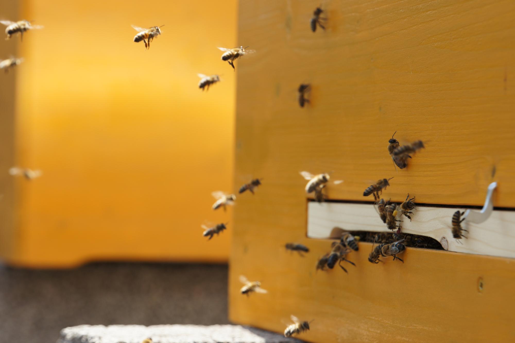 Im Zweifel für Biene GLS Bank bietet drei Schwärmen