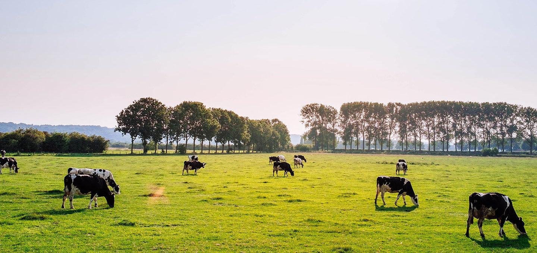 """""""Schredderküken und Wegwerfkuh"""" - Die Landwirtschaft und wir"""