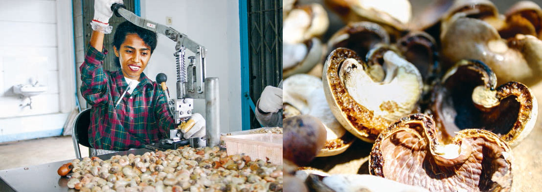 Kernige Kurzschlussreaktion - die vielleicht besten Cashewkerne
