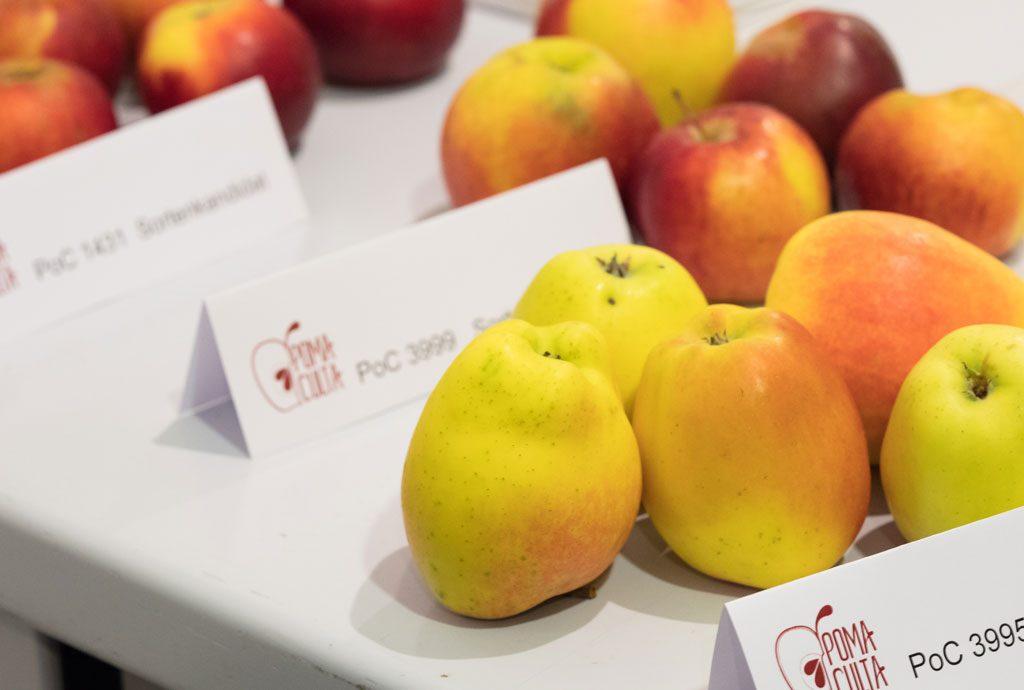 Mit ökologischer Pflanzenzüchtung - Mehr Qualität in der Ernährung