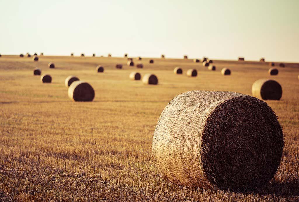 Der Wirtschaftsteil :: kompakt Nr. 265 Daniel Überall über Landwirtschaft