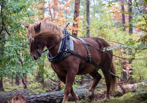 kiezbett: Holz aus naturnaher Waldwirtschaft