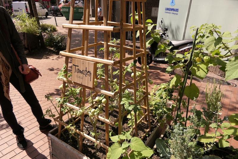 Tomaten in einem Urban Gardening Projekt in Witten