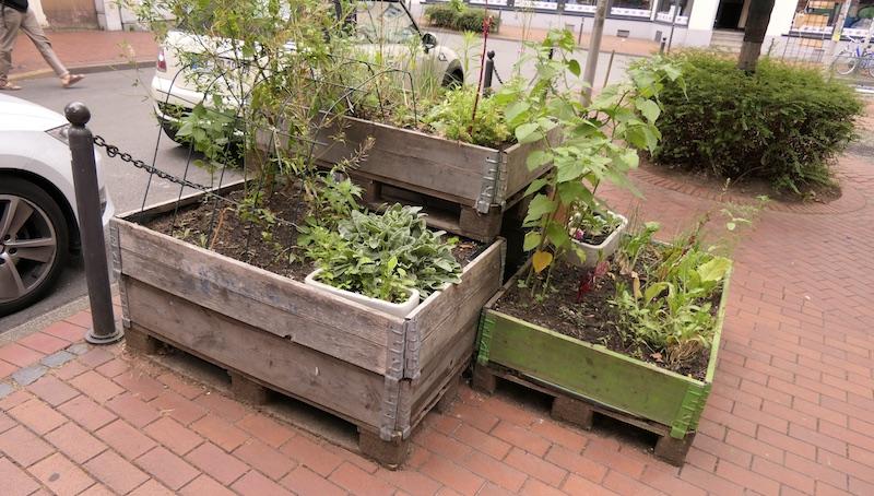 Gartenprojekt Urban Gardening in Witten - Pflanzen