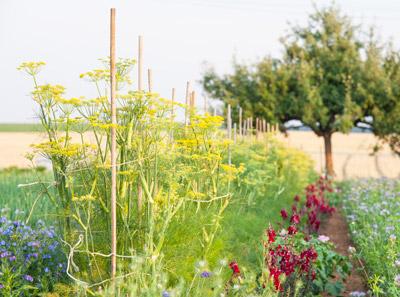 ZS Landwirtschaft: Ökozüchtung