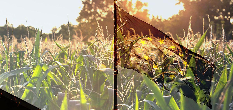 Europa – Unsere Wahl (2): Wahre Preise für Pestizide und CO2-Emissionen