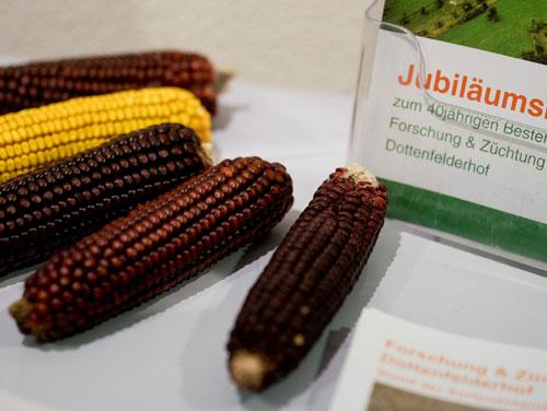 Saatgut-Tagung Mais