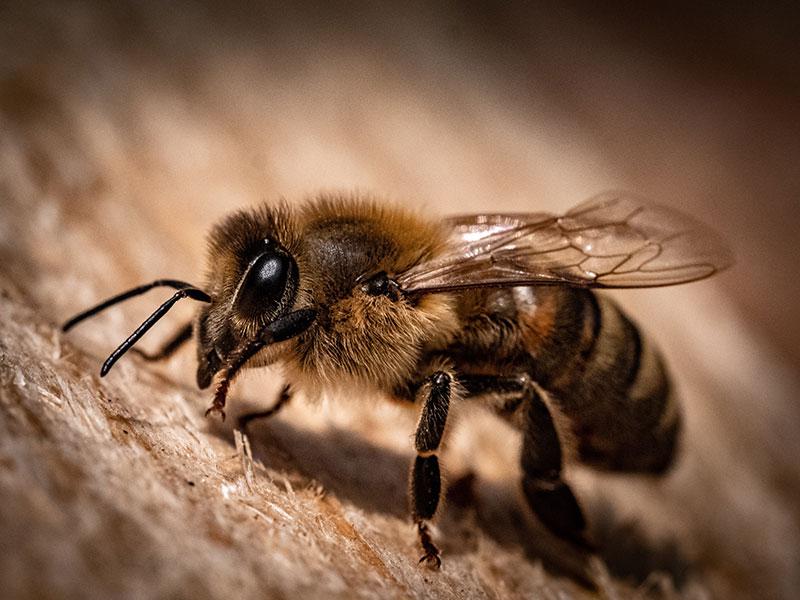 Bienen retten!