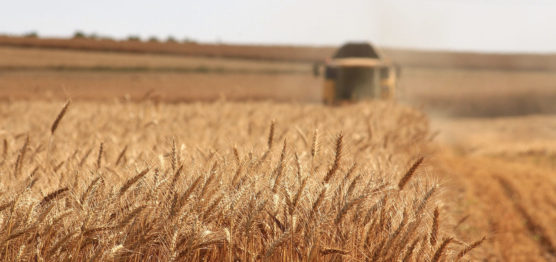 Die Landwirtschaft braucht einen Systemwandel
