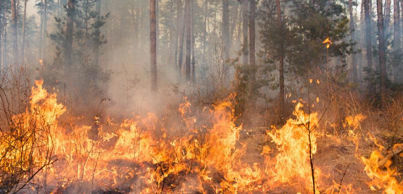 Klimawandel: Brennende Wälder setzen CO2 frei